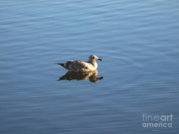 Photograph - Lone Seagull Photograph by Kristen Fox