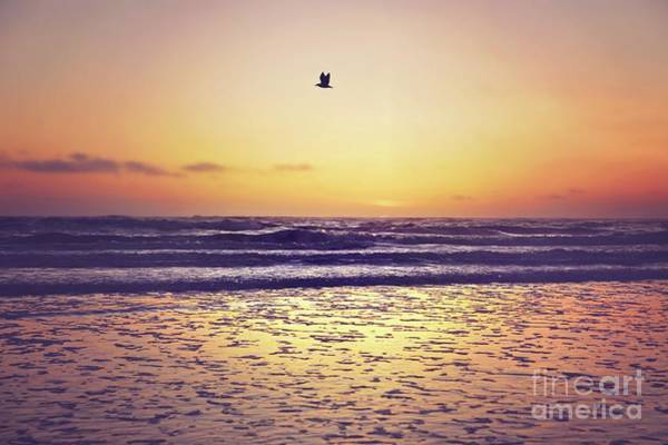 Wall Art - Photograph - Lone Seagull by Sylvia Cook