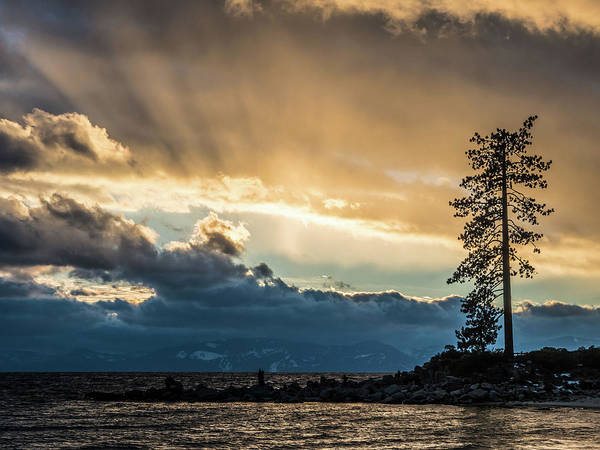 Photograph - Lone Sentinel by Martin Gollery
