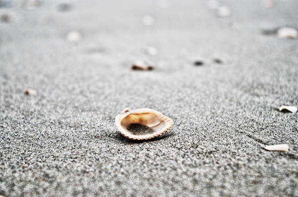 Photograph - Lone Shell by Sharon Popek