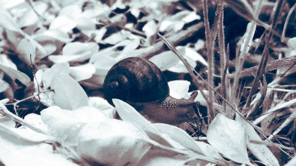 Photograph - Lone Snail by Eddie G