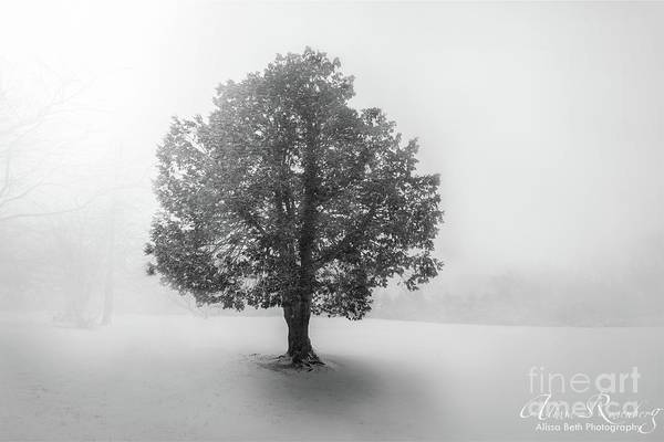 Photograph - Lone Snow Tree On Long Island, New York by Alissa Beth Photography