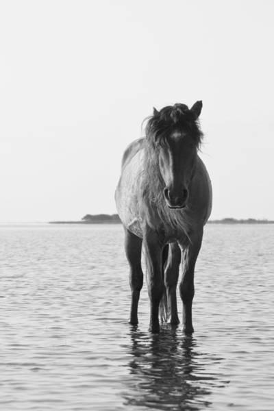 Photograph - Lone Stallion by Bob Decker