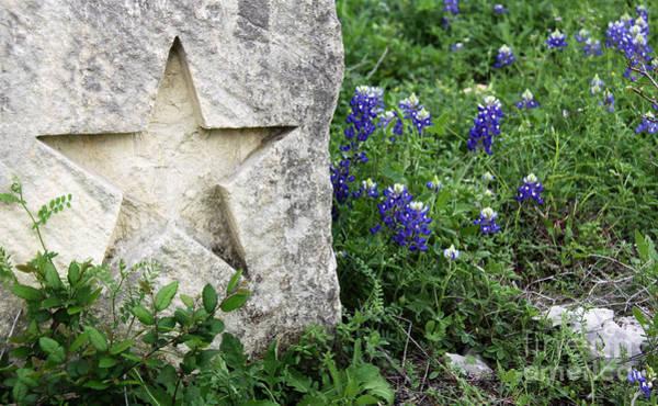 Texas Bluebonnet Photograph - Lone Star Bluebonnets by Gayle Johnson