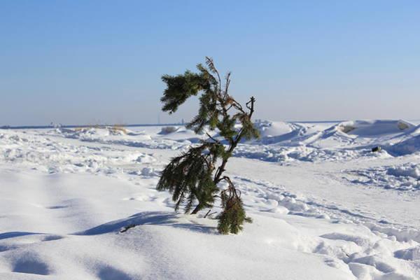 Sestroretsk Photograph - Lone Survivor by Christine Rivers