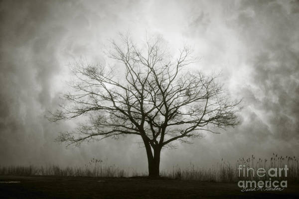 Lone Tree And Clouds Art Print