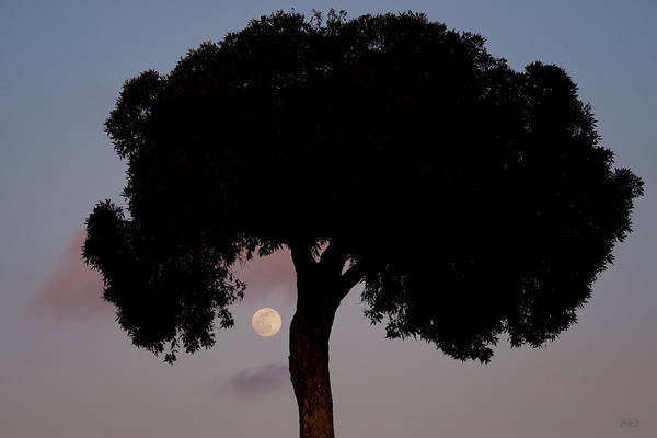 Photograph - Lone Tree And Rising Moon by David Gordon