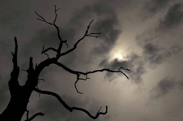 Photograph - Lone Tree And Sun Toned by David Gordon