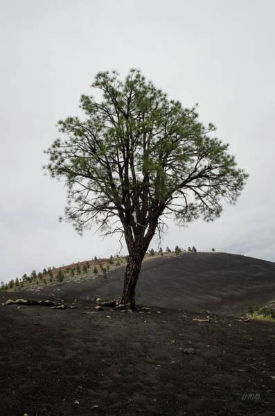 Photograph - Lone Tree And Volcanic Ash by David Gordon