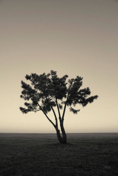 Photograph - Lone Tree At Twilight Toned by David Gordon