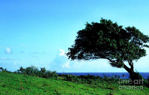 Photograph - Lone Tree Blue Sea by Thomas R Fletcher