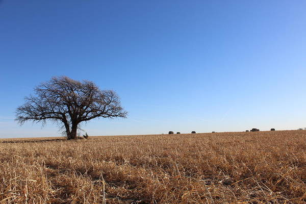 Wall Art - Photograph - Lone Tree In A Field by Weathered Wood