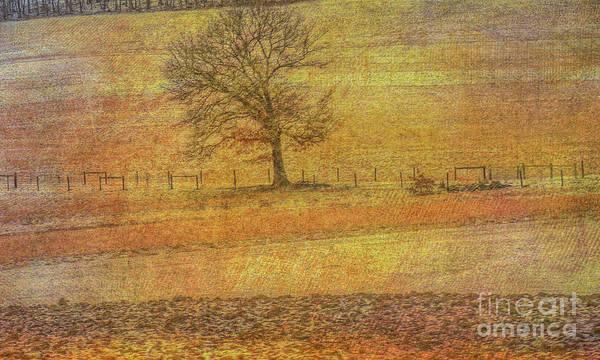 Snow Fence Digital Art - Lone Tree In Farm Field Winter by Randy Steele