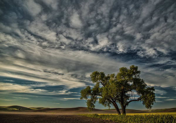 Photograph - Lone Tree In Field by Bob Cournoyer