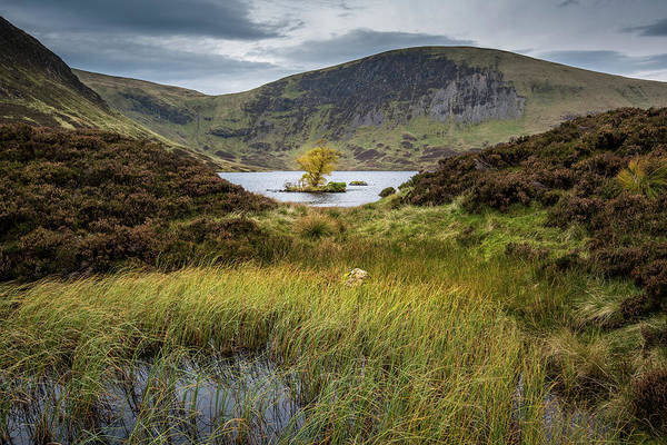 Southern Uplands Wall Art - Photograph - Lone Tree In Loch Skeen by George Robertson