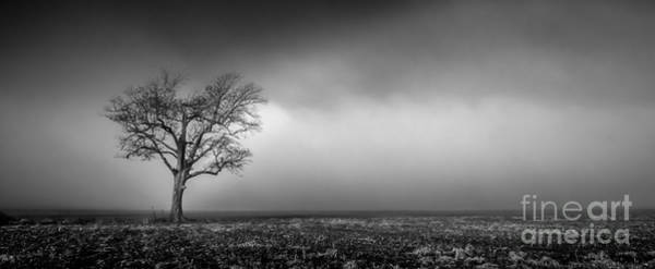 Photograph - Lone Tree In The Mississippi Delta by T Lowry Wilson