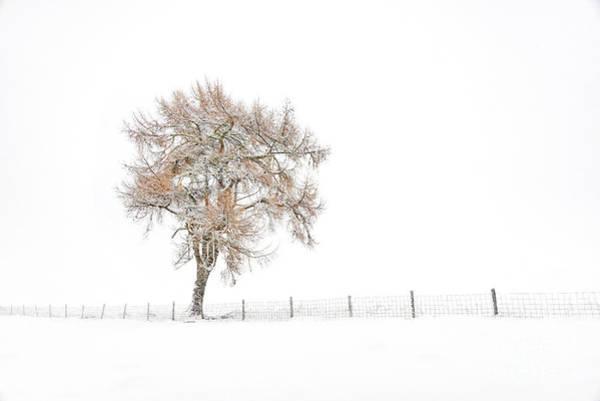 Wall Art - Photograph - Lone Tree In Winter by Janet Burdon