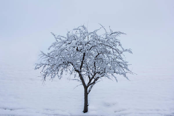Wall Art - Photograph - Lone Tree In Winter by Steve Gadomski