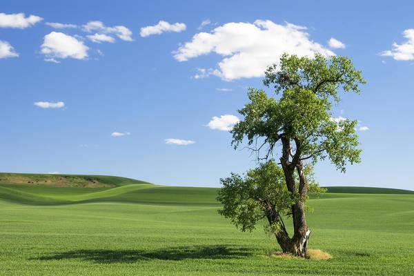 Photograph - Lone Tree by Kyle Wasielewski