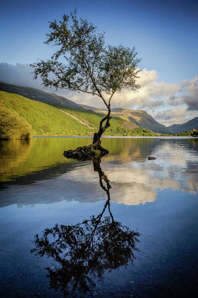 Photograph - Lone Tree, Llyn Padarn by Peter OReilly