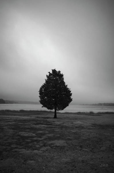 Photograph - Lone Tree Looking South Bw by David Gordon