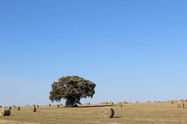 Wall Art - Photograph - Lone Tree by Weathered Wood