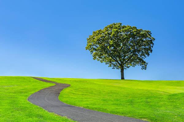 Photograph - Lone Tree by Mihai Andritoiu