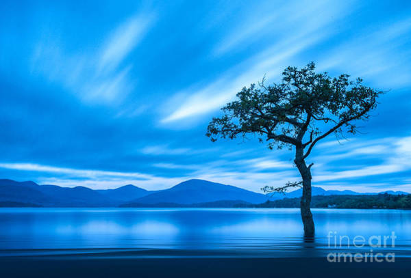 Colours Photograph - Lone Tree Milarrochy Bay by Janet Burdon