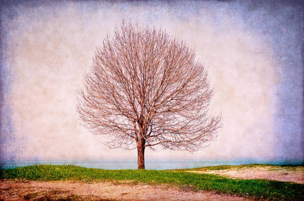 Photograph - Lone Tree by Milena Ilieva