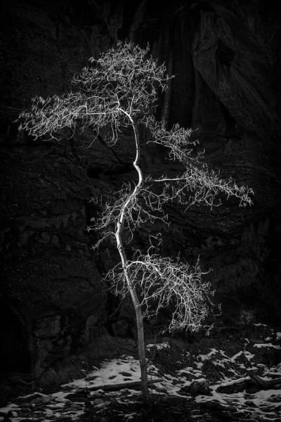 2017 Photograph - Lone Tree by Niall Whelan