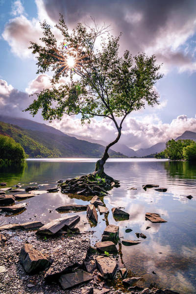 Photograph - Lone Tree Of Llanberis by Framing Places