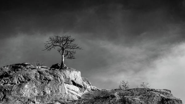 Photograph - Lone Tree On Rocks - Black And White by Stephen Holst