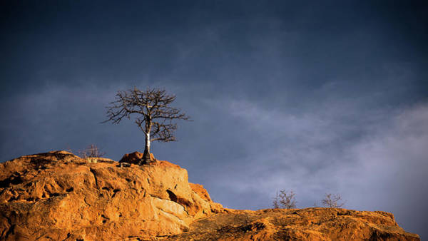 Photograph - Lone Tree On Rocks - Color by Stephen Holst