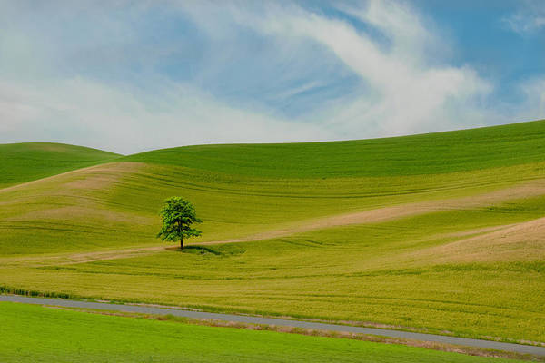 Palouse Photograph - Lone Tree On The Idaho Palouse by Alvin Kroon