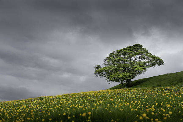 Wall Art - Photograph - Lone Tree On The Kent Downs.  by Ian Hufton