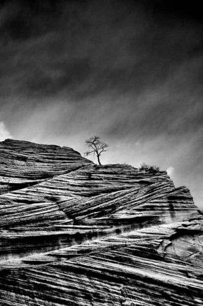 Wall Art - Photograph - Lone Tree Rid by Sarah-jane Laubscher