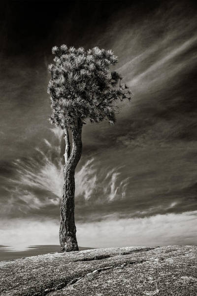 Photograph - Lone Tree by Rikk Flohr