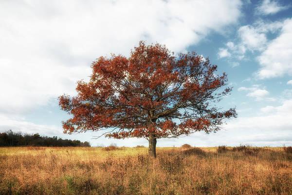 Photograph - Lone Tree by Ryan Wyckoff