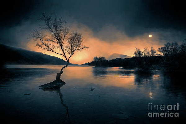 Wall Art - Photograph - Lone Tree Snowdonia by Adrian Evans