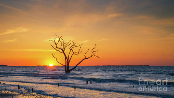 Wall Art - Photograph - Lone Tree Sunrise  by Michael Ver Sprill