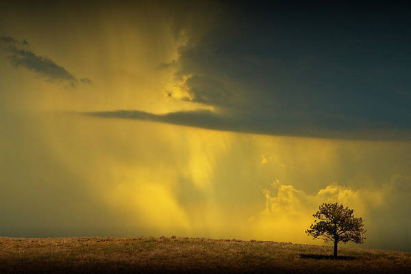Photograph - Lone Tree With Oncoming Thunderstorm by Randall Nyhof