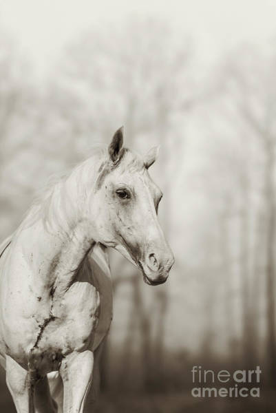 Photograph - Lone White Wild Horse II by Dimitar Hristov
