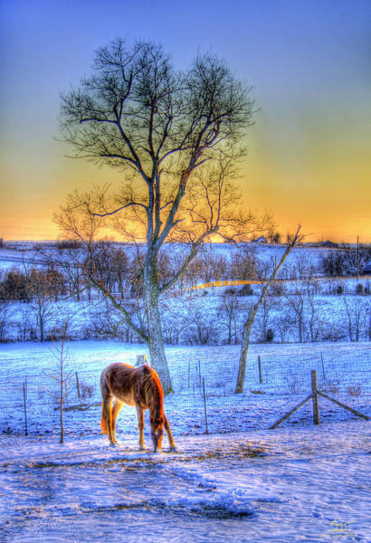 Photograph - Lone Winter Horse by Sam Davis Johnson