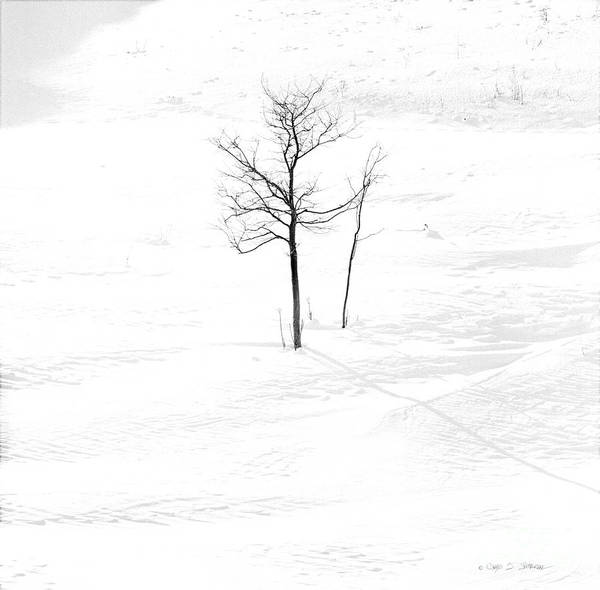 Photograph - Lone Winter Tree by Craig J Satterlee