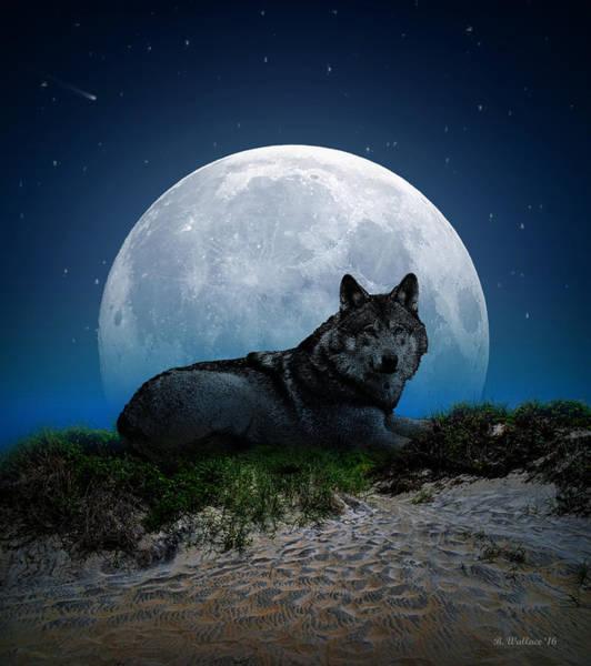 Idealistic Wall Art - Photograph - Lone Wolf by Brian Wallace