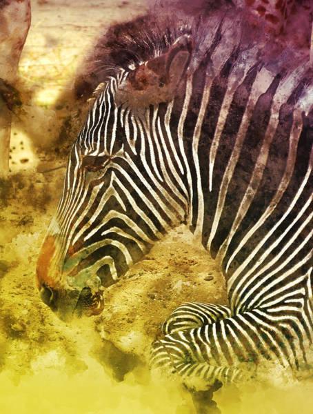 Photograph - Lone Zebra by Ericamaxine Price
