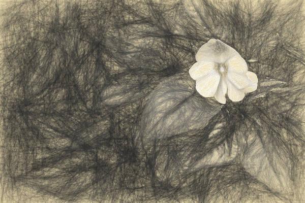 Digital Art - lonely 1 II by Jon Glaser