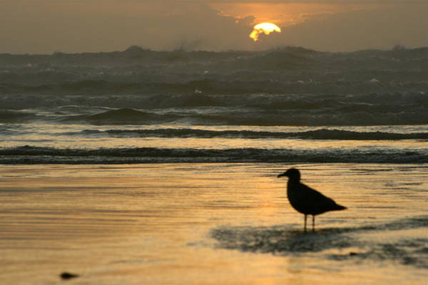 Just Birds Photograph - Lonely Bird Sunset by Angie Wingerd