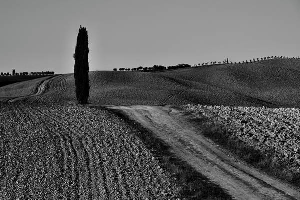 Photograph - Lonely Cypress Tree Bw by Ivan Slosar