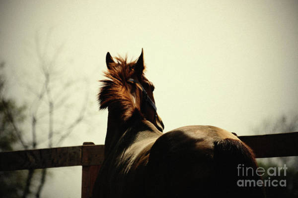 Photograph - Lonely Horse by Dimitar Hristov